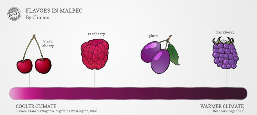 Malbec-wine-taste-flavors